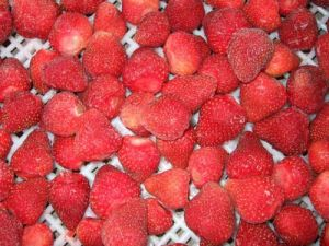 IQF Frozen Dried Strawberry
