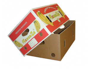 Fruit corrugated Carton Box (FP5072) pictures & photos
