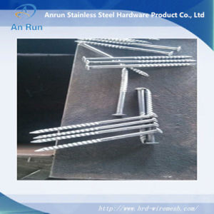 Hot Dipped Galvanized Roofing Nails Screw+ Washer pictures & photos