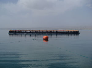 Sea Cages (20121002_105849_) pictures & photos