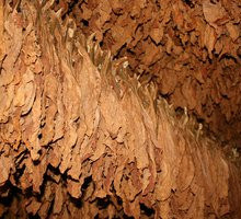 Flue Cured Tobacco Flavor (top note)