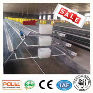 Poultry Farm Equipment and Egg (Layer) Chicken Cages System pictures & photos