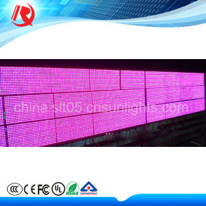 Pixel 10 mm P10 Pink Color Outdoor LED Display pictures & photos