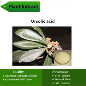 Ursolic Plant CAS: 77-52-1 Enhance Immune Function Ursolic Acid Ursolic pictures & photos