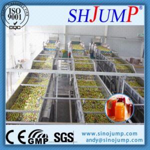 Plum Processing Machine pictures & photos