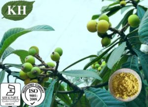 Loquat Leaf Extract Ursolic Acid25%-98%, Maslinic Acid 1%~20% pictures & photos