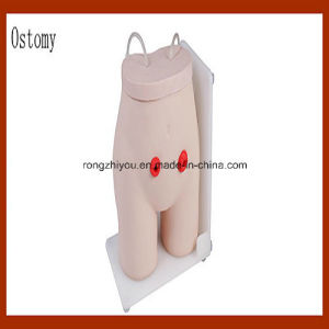 Medical Human Ostomy Care Simulator Model for Teaching