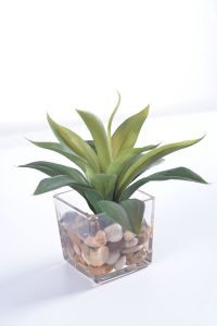 Decoraton Green Color Agave in Glass with Faux Water