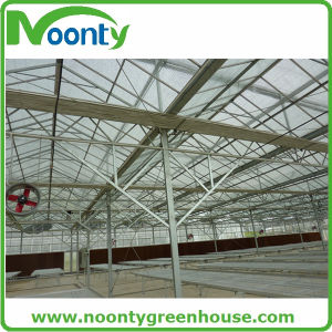 Multi-Span Tempered Glass Greenhouse  for Growing Tomato pictures & photos