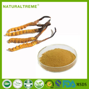 Whosale Health Organic Cordyceps Aweto Powder pictures & photos