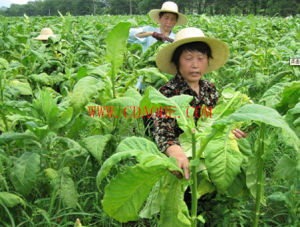 EDDHA-Fe 6% Organic Fertilizer pictures & photos