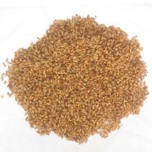 Semen Platycladi Extract, Semen Platycladi Powder Extract, Semen Platycladi P. E. 10: 1 20: 1 pictures & photos