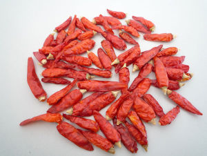 Whole Chilli Pepper 9cm pictures & photos