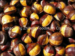 Chinese New Crop Fresh Chestnut with Wholesale Price pictures & photos