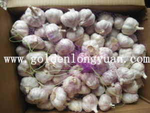 Normal White Garlic with Good Quality From Factory pictures & photos