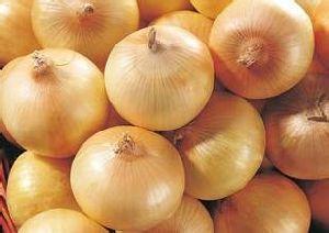 2016 New Season Vegetables Yellow Onion