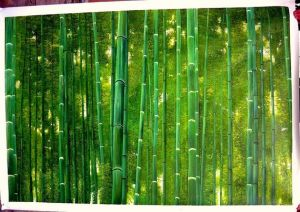 Bamboo Forest Oil Painting