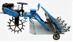 Belt Type Rice Transplanter (2ZT-10238BG) pictures & photos