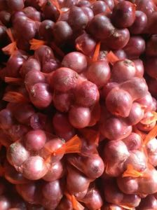 5-7 Cm Red Onion Export for Middle Market /Canada Market pictures & photos
