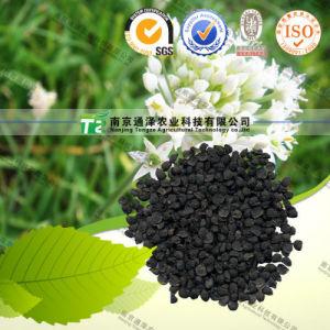 Manufacturer Supply Sex Herbal Medicine Allium Tuberosum Rottler pictures & photos