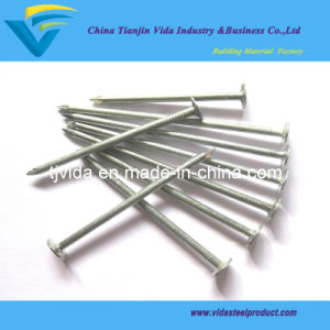E. G Clout Nail From Factory with Competitive Price and Excellent Quality pictures & photos