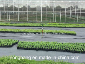 100% PP Mulch Film Landscape Fabric for Agriculture pictures & photos