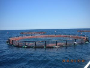 HDPE Circular Net Cage pictures & photos
