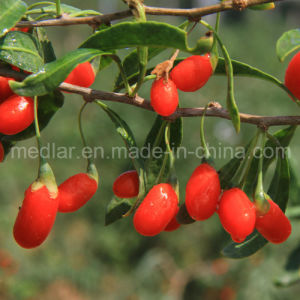 Medlar Organic Herbs Red Dried Gojiberry pictures & photos