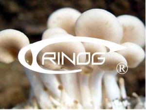 Indoor Mushroom Production Machinery pictures & photos