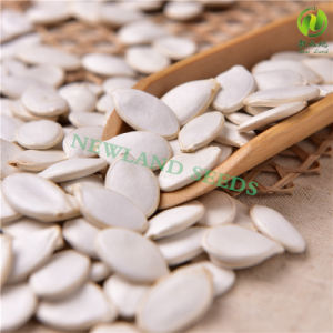 Green Snow White Pumpkin Seeds 11cm/12cm/13cm/14cm for Cook