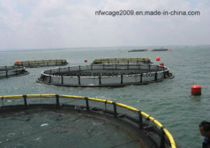 High Quality Best Price Aquaculture Traps Product Type Circle Floating Fish Cage pictures & photos