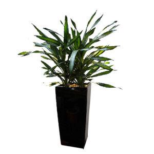 Decor Garden Fiberglass Planter Box pictures & photos