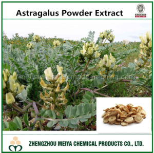 Tcm Astragalus Membranaceus Root Powder Extract with Astragaloside/Polysaccharides Assay pictures & photos