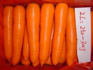 Fresh Carrot of Size 2l