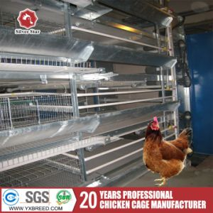 Poultry Control Shed Equipment Egg Chicken Container for Sale pictures & photos