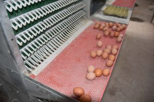 Layer (Egg) Chicken Cages System Equipment pictures & photos