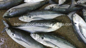 Whole Round Frozen Seafood Hardtail Scad Fish pictures & photos