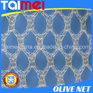 HDPE Agricultural Fruit/Olive Net/Harvest Net/Collection Net pictures & photos