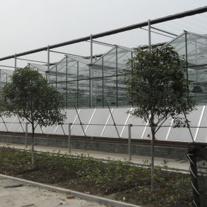 Agricultural High Transmission Multi-Span Glass Greenhouse for Sale pictures & photos
