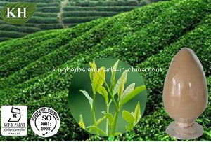 Kingherbs′ 100% Natural Green Tea Extract/Camellia Sinensis Extract pictures & photos