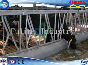 Farm Cow/Cattle Headlock with 3mm Thickness HDG Pipe (FLM-F-003) pictures & photos