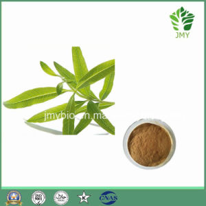 Weight Loss Raw Ingredients Lemon Verbena Extract: 12: 1~40: 1 pictures & photos