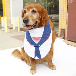 Sailor Pet Accessories Stripes Dog Collar with Bandanas pictures & photos