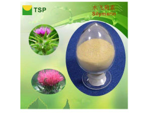 GMP Manufacturer Supply Milk Thistle Extract Pure Natural Silybin pictures & photos