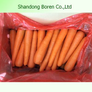 Chinese Fresh Hot Sale Carrot