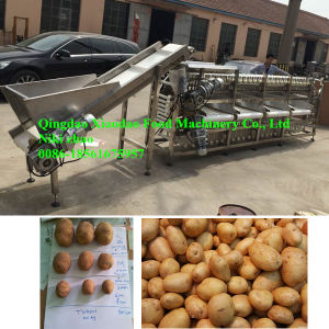 Automatic Potato Sorting/Grading Machine/Grading Size pictures & photos