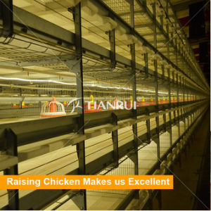 Automatic Poultry Equipment for Broiler Raising pictures & photos