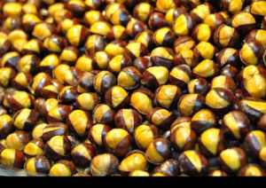2017 Chinese Fresh Chestnut with Good Price pictures & photos