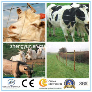 Long-Life Fixed Knot Woven Wire Fence / High Strength Horse Fence pictures & photos