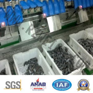 Trepang Chicken Abalone IP69 SUS 304 Sieving Machine pictures & photos